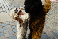 http://www.quatrefotos.net/files/gimgs/th-45_45_39-peru-02-puno-cuzco-068.jpg
